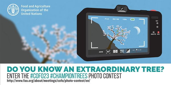 COFO23 ChampionTrees Photo Contest, Win a Trip to Rome