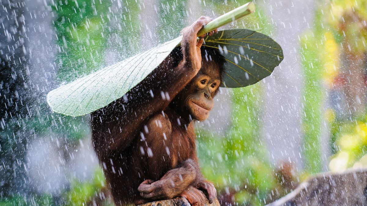 National Geographic Nature Photographer of the Year competition