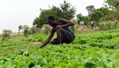 Apply to the Agriculture for Food Security 2030 Training Fully Funded
