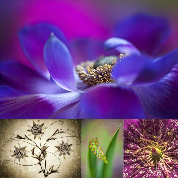 Photographic Competition 2017 by RHS