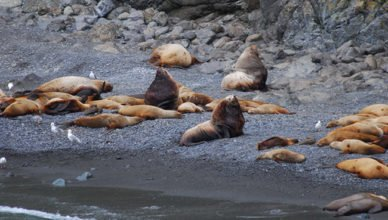 NOAA Fisheries Steller Sea Lion Population Count