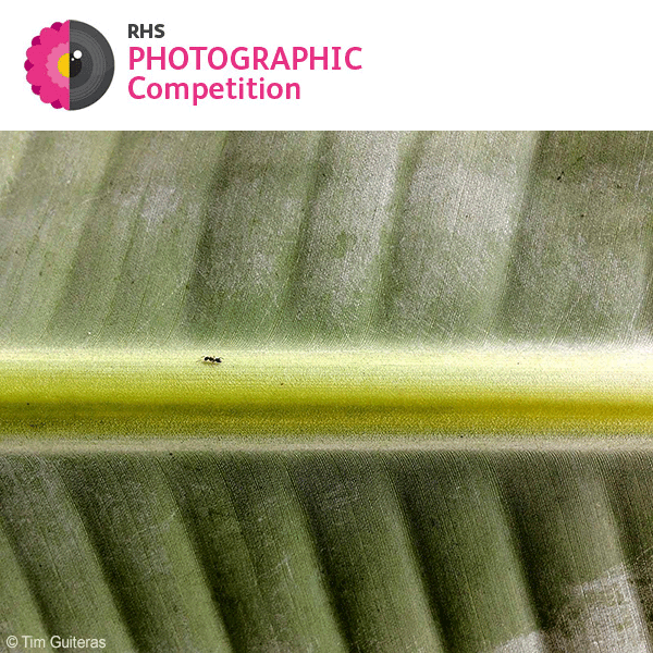 RHS Photographic Competition 2018