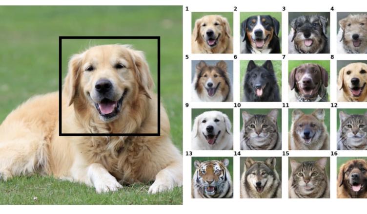 Generative Dog Images challenge