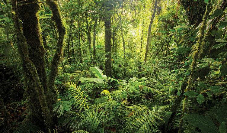 $10M Rainforest XPRIZE
