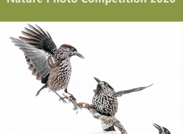 Nature Photo Competition 2020