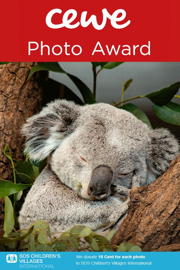 CEWE Photo Award 2021