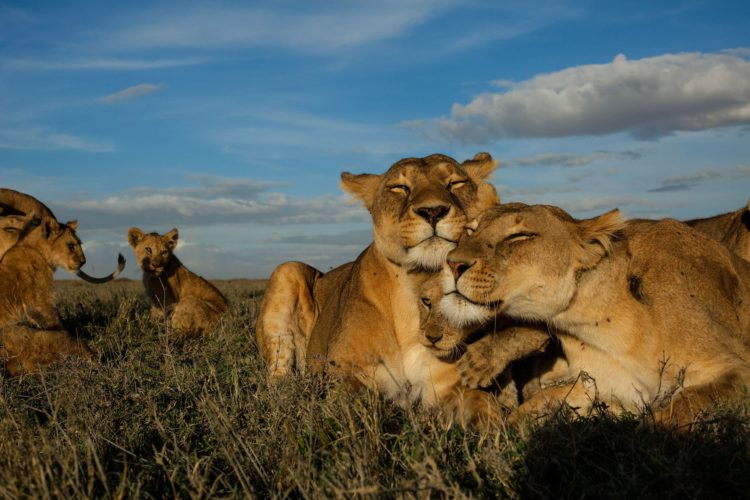 National Geographic Call For Proposals For Big Cats