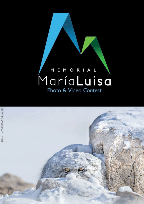 Memorial María Luisa Photo And Video Contest
