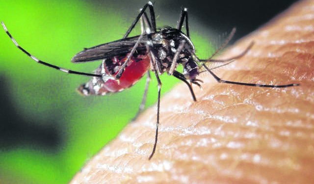 The Grand Challenge - $50,000 for tacking Mosquitos