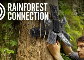 Rainforest Connection Species Audio Detection