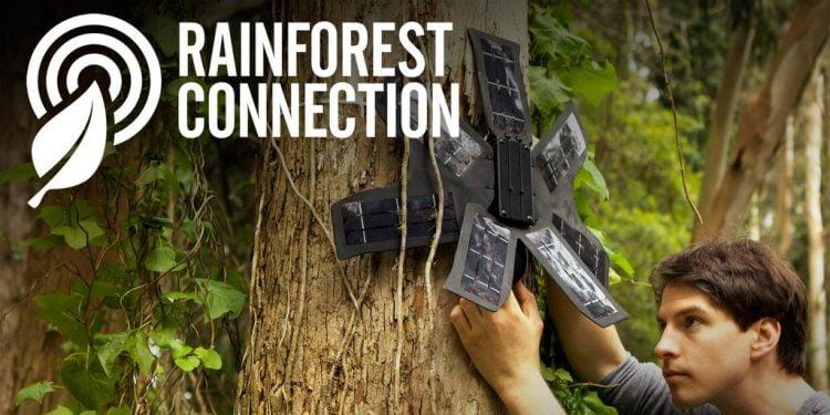 Rainforest Connection Species Audio Detection