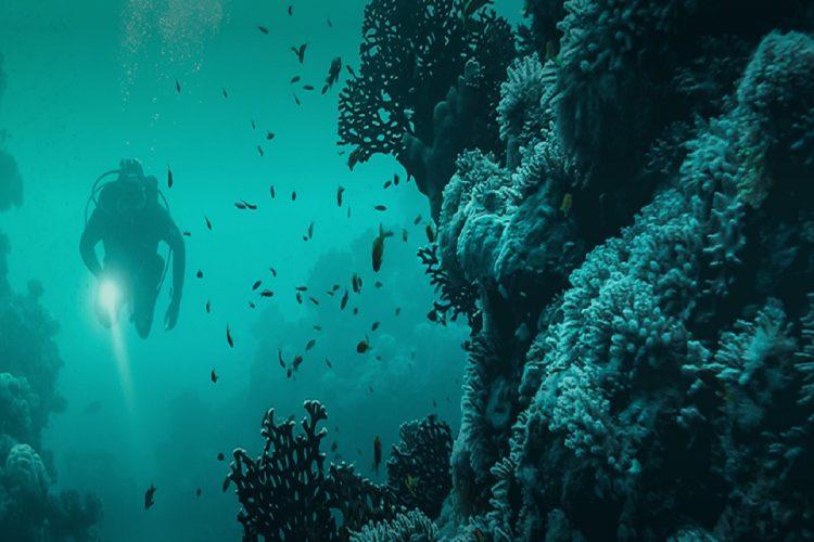 Ocean Changemakers Challenge The Next Wave Of Innovators