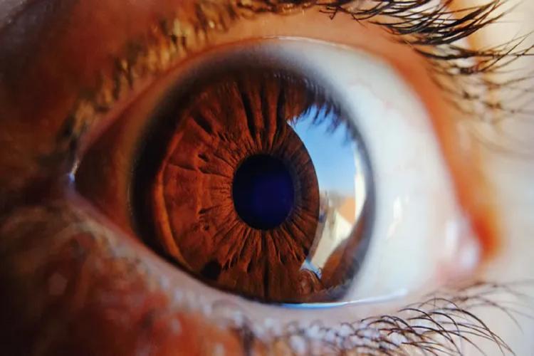 NEI 3-D Retina Organoid Challenge