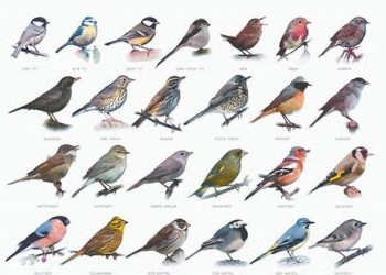BirdCLEF 2021 - Birdcall Identification