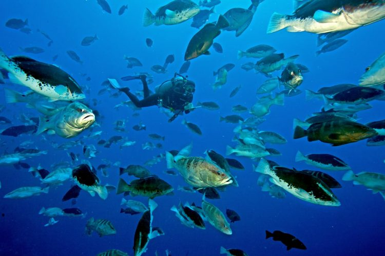 Social Solver Fish Conservation Cold Chain Competition