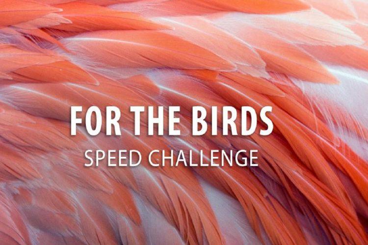 Birds Speed Challenge