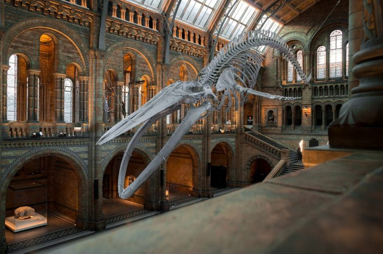 Reimagine Museums Of The Future