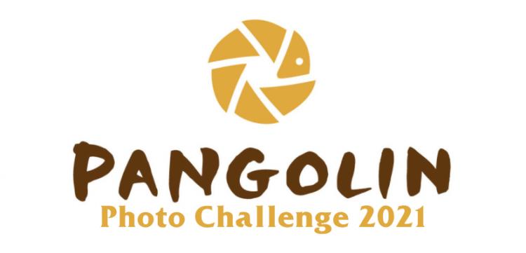 Pangolin Photo Challenge
