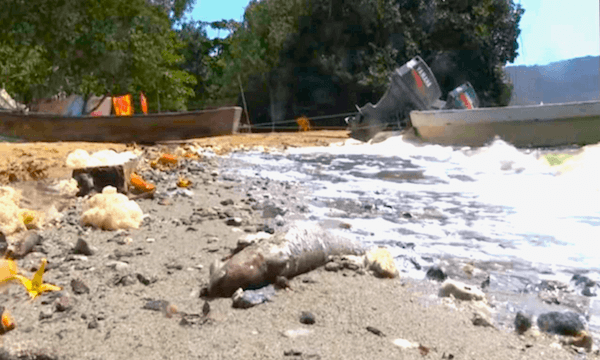 Plastic Collection in the Ocean in Mexico Competition