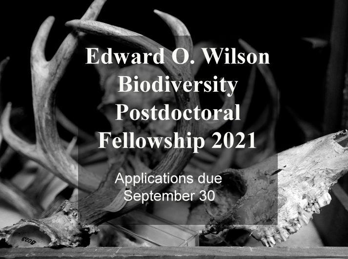 Edward O. Wilson Biodiversity Postdoctoral Fellowship